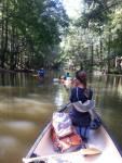 Exploring the Bartram Canoe Trail - Champion Cypress