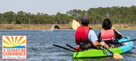 The Dolphins & Wildlife Kayak Experience - A Alabama Beaches Signature Experience