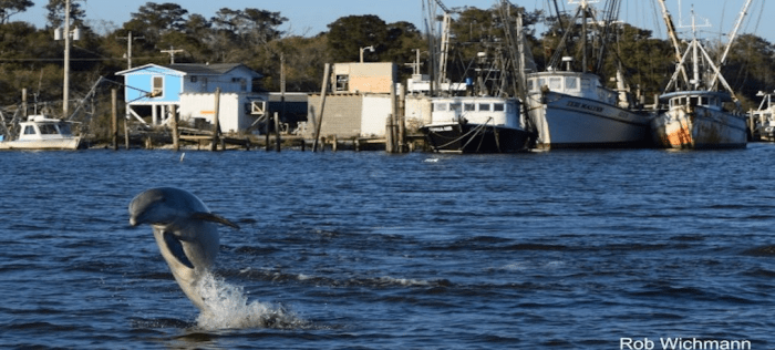 The Dophins & Wildlife Boat Charter