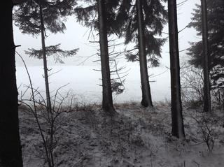 wind wald schutz unterschlupf