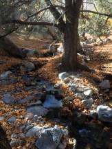 Ramsey Creek in the Upper San Pedro River Basin.