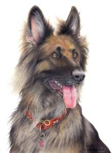 coloured pencil pet portrait german shepherd dog commission custom drawing artwork realism