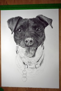 graphite dog pet portrait drawing artwork commission custom
