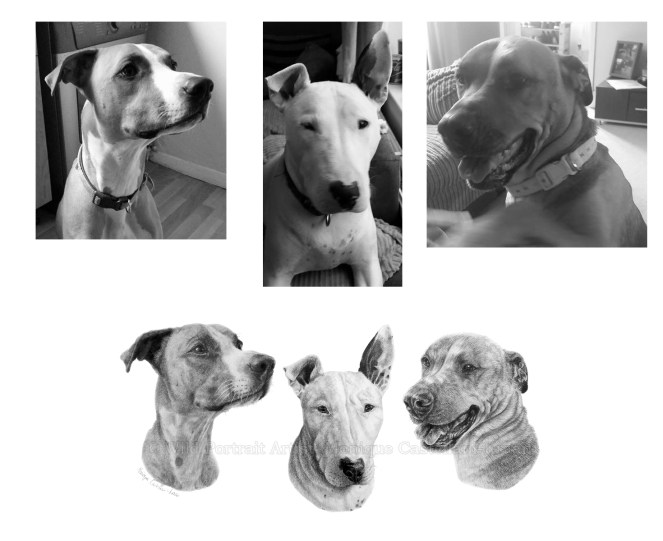 pet portrait graphite commission dog reference photo examples
