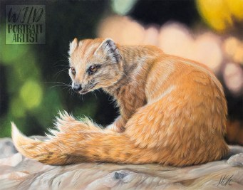 """Basking Mongoose"" - 11 x 14 inches, pastel pencils and pan pastels on Clairefontaine Pastelmat. Art by Wild Portrait Artist. Available for sale."