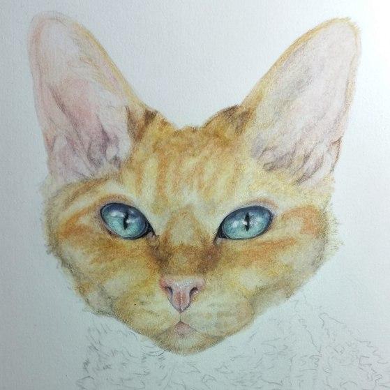 pearl cat sphinx coloured pencil portrait colored pencil drawing art commission pet portrait
