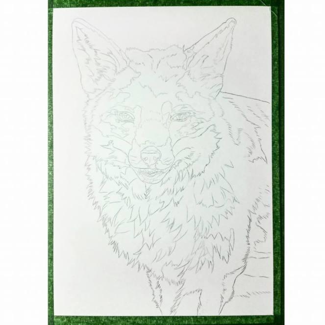 cheeky fox sketch