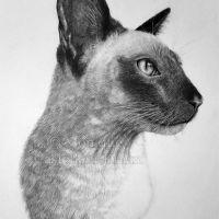 """Portrait of Toto"" - 11x14 Inch pet portrait in graphite. Art by Wild Portrait Artist."
