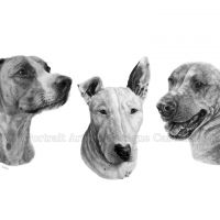 """""""Spencer, Bruno and Roxy"""" 11x14inch commission, graphite on Fabriano Artistico HP watercolour paper. Art by Wild Portrait artist. SOLD."""