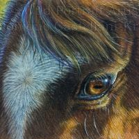 """""""Gentle Eyes"""" - original 2.5 x 3.5 inch miniature ACEO/ATC drawing in coloured pencil, on Strathmore Bristol Vellum. I used a mixture of Touch-up Texture and Titanium White powder for the highlights. Own ref photo used. Art by Wild Portrait Artist. Available for sale."""