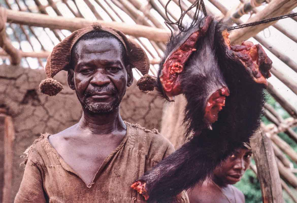 Image result for chimps hunted for bushmeat