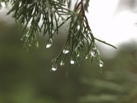 Resilient Rain Drop