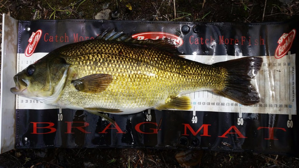 50cm Bass