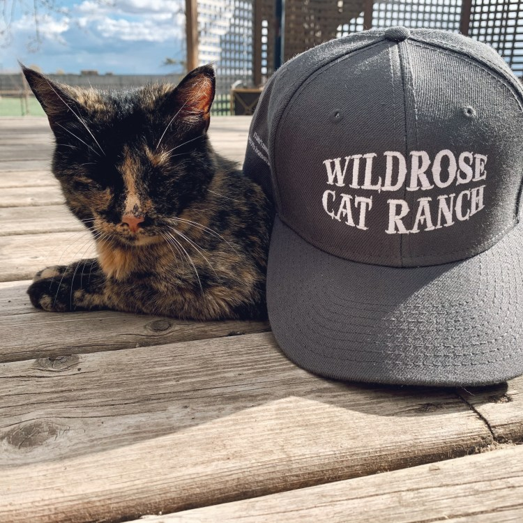 Wildrose Cat Ranch Hat Grey Snapback