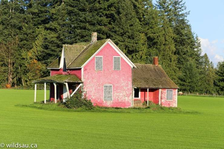 red house green field
