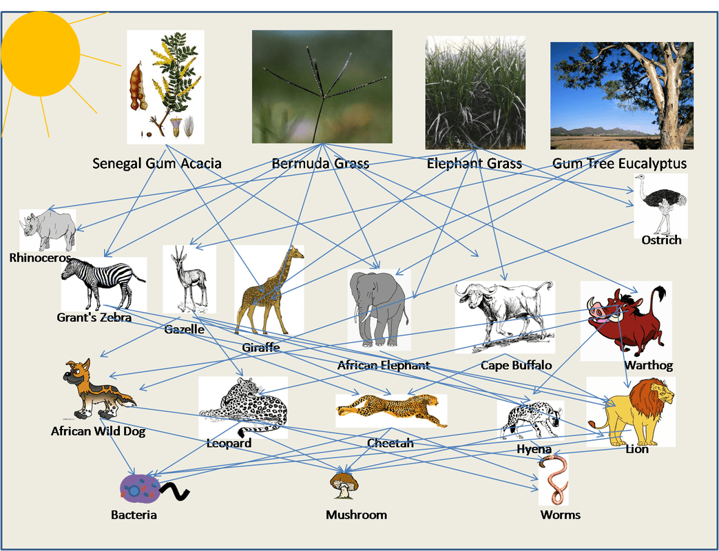 Foodweb Interaction With Explanation