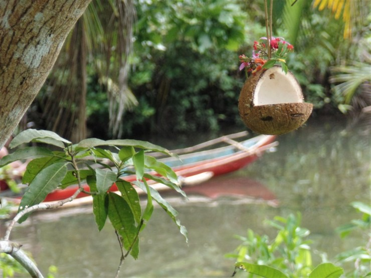 coconut bird feeders attract birds to beach resorts, cottages, gardens or homes in siargao island, san isidro