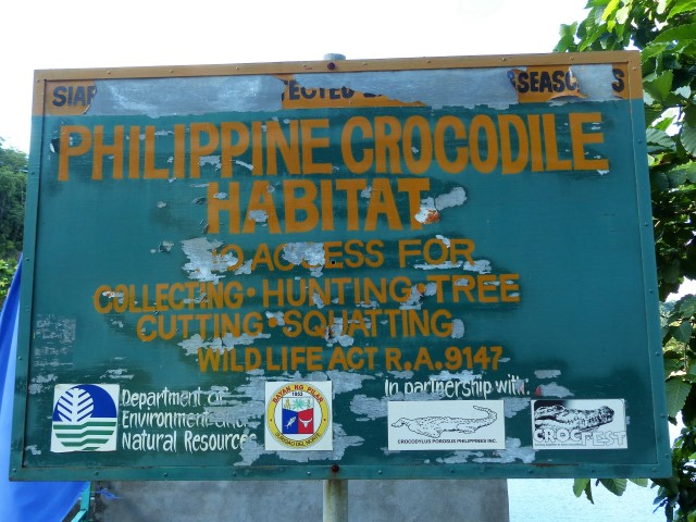 The Philippine crocodile (Crocodylus mindorensis) at Paghungawan Marsh in Pilar, Siargao.