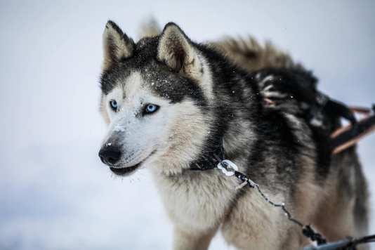 Dog Sledding Sweden 48
