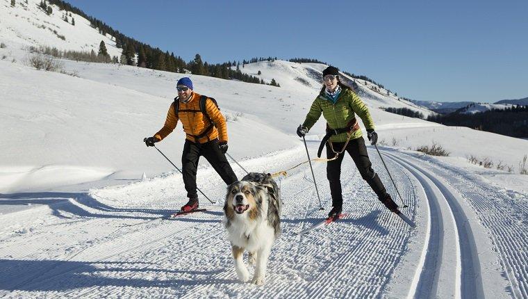 skijoring-for-dogs
