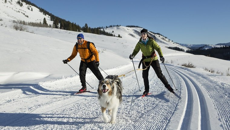 skijoring-for-dogs