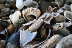 Frosty beach