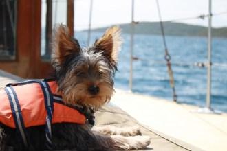 The little sea-dog