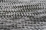 Shore patterns