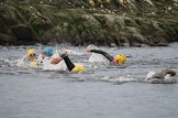 Swimmers start