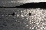 Glitter, Carsaig Bay