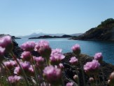 Sea pinks and Jura