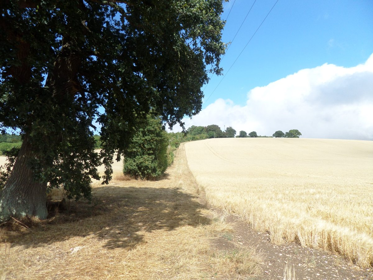 Herts Embraced 2.3:  Open fields to Markyate