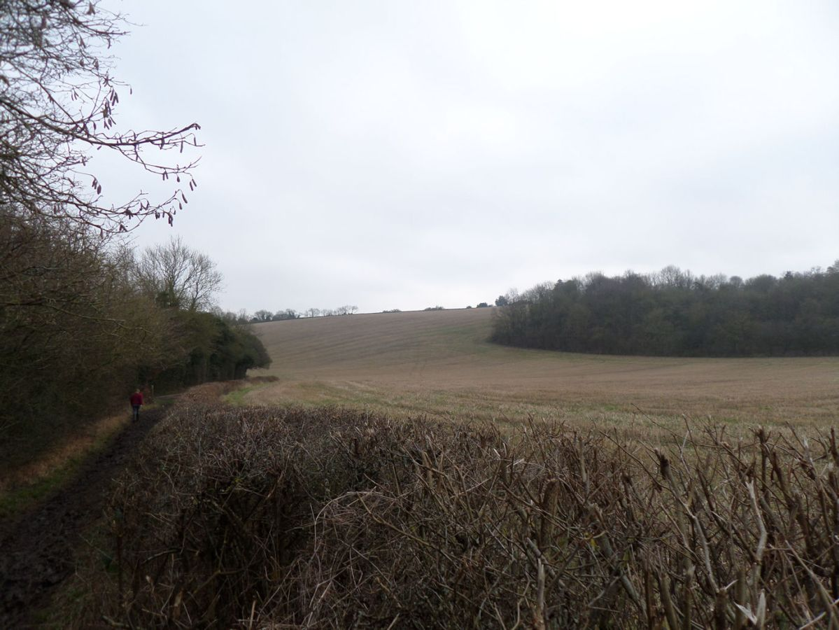 New Year's Day welly walk in Stokenchurch