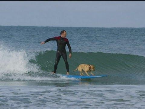 Mango the Cornish Surfing Dog