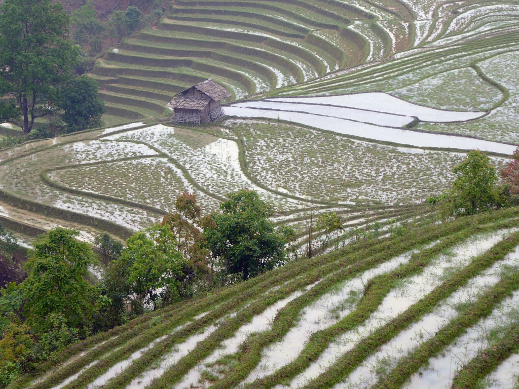 Sapa Mountains Rice Paddy Hut