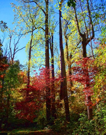 colors of october, woods scene, south indiana