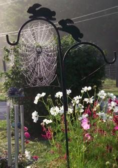 spiderwebs1