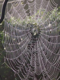 spiderwebs4