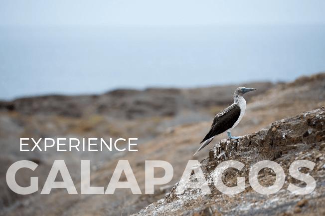 Sail the Galapagos Islands