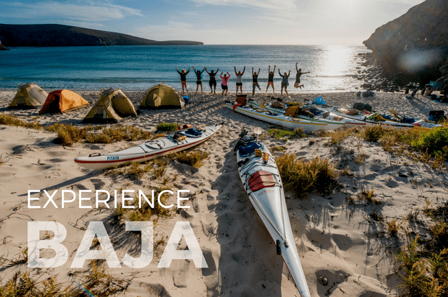 Baja Kayak and Whale Adventure