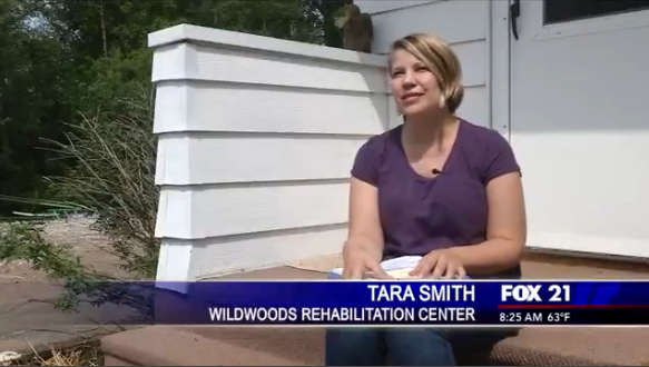 Fox21 Presents Animal Answers: Wildwoods