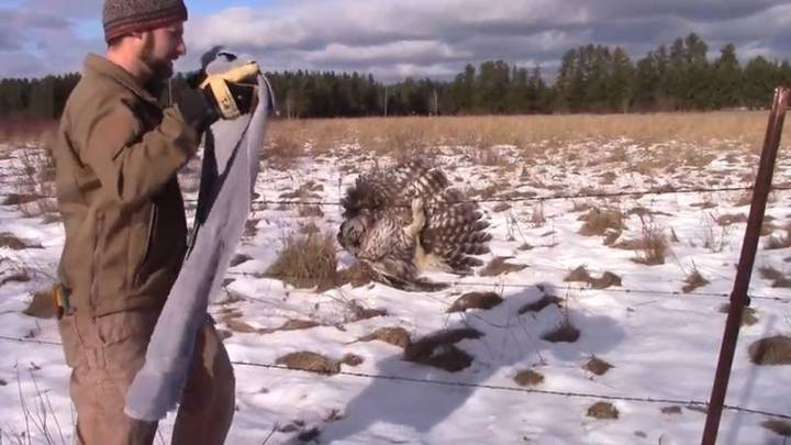 Luke finds an owl caught in a barbed wire fence