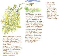 Lady's bedstraw and sedge warbler.