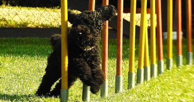 Hundesportfreunde Degerloch: Viel mehr als eine Hundeschule