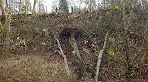 Waldarbeiter am Hang mit abgesägten Bäumen