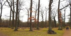 Im Eichenhain liegender Astschnitt