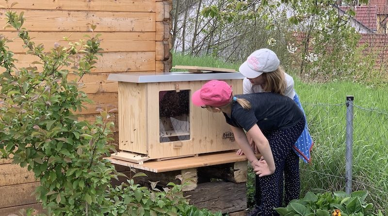 Zwei Mädchen schauen durch die Scheibe ins Bienenhaus