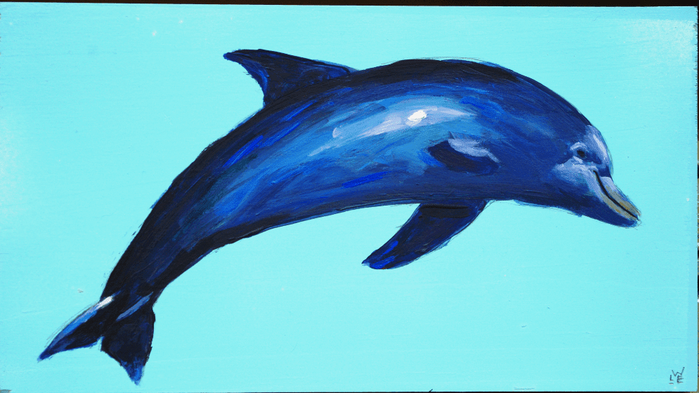 Dolphin – Day 4