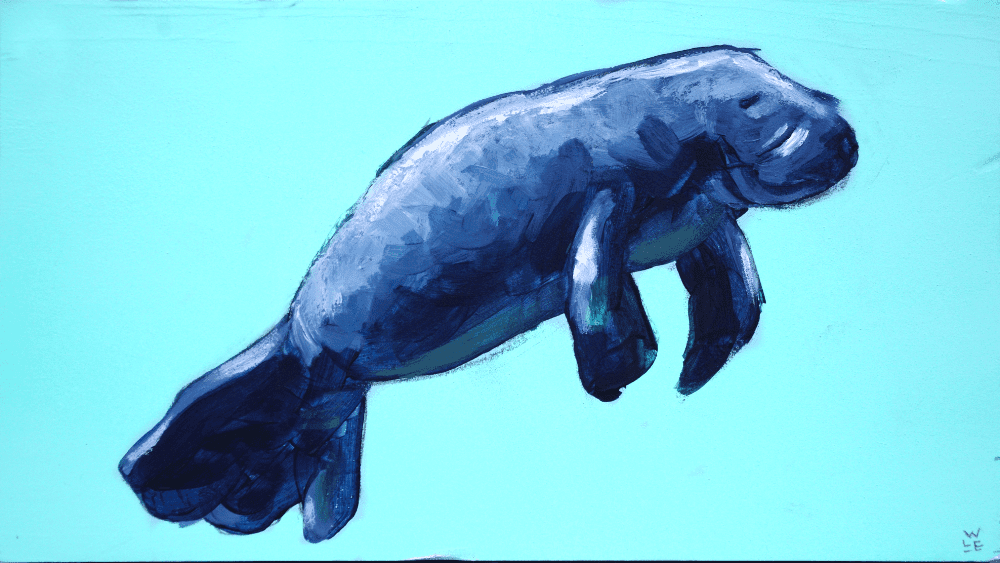 Manatee Animal Art Aquatic Marine Wildlife Artist Will Eskridge