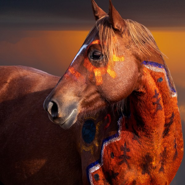 colorful war pony with head turned and sunset colors painted into sky